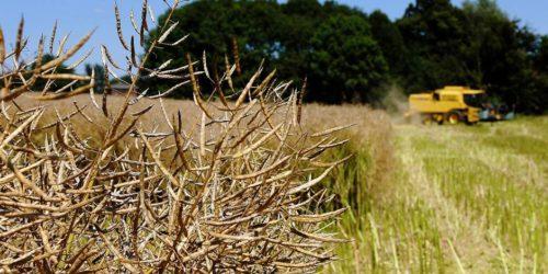 15 mai, Ciné-débat: Les biocarburants, véritable remède ?
